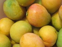 Jamaican Common Mango