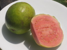 Guava Jamaican Fruit