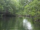Mangrove Avenue Black River