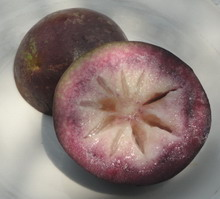 Image of Starapple, Jamaican fruit