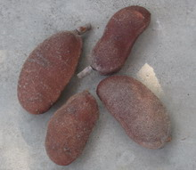 Image of Stinking Toe, Jamaican fruit