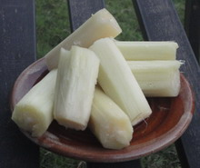 Image of Sugar Cane, Jamaican fruit