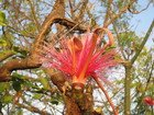 Flower, Jamaica