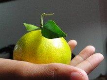 Mangerine Jamaican Fruit