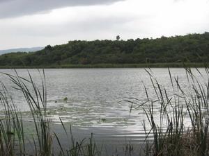 Wallywash Pond Great Pond Jamaica