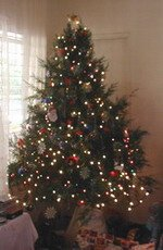 Jamaican Christmas Tree
